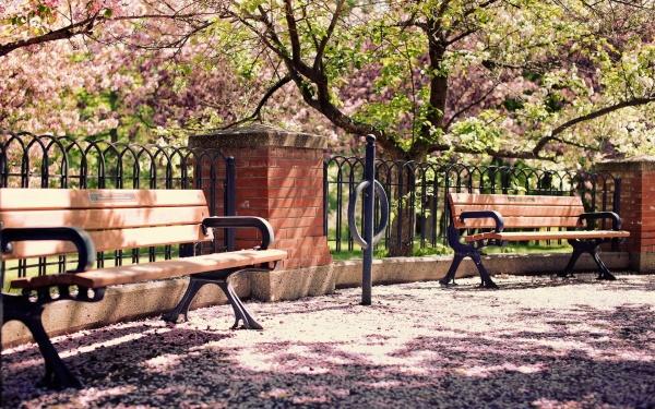 park-spring-blossom-1920x1200